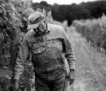 producteur dans ses vignes