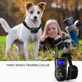 Collier GPS : quels sont les meilleurs modèles ?